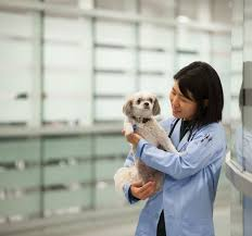 JAMB Subject Combination For Veterinary Medicine