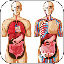 UNN Direct Entry Requirements For Human Anatomy